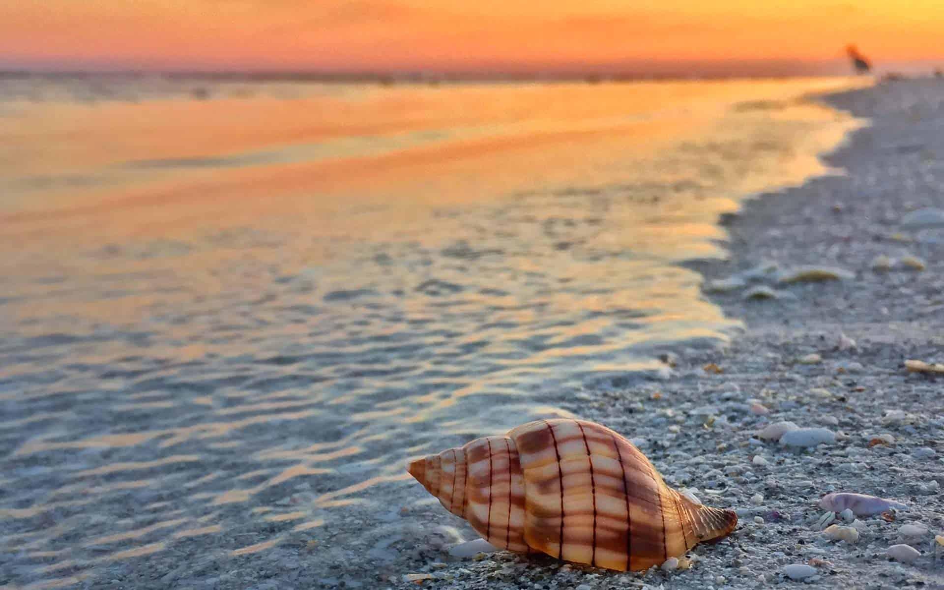 Sanibel And Captiva Island Shell On Sunset Beach