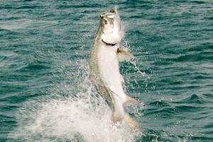 Sanibel Island Captiva Inshore Fishing