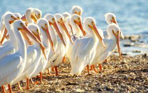 Sanibel Island Captiva Island Nature Birds